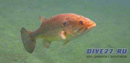 Красивые рыбки в США