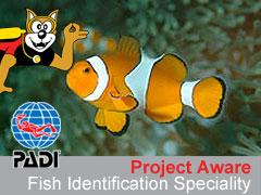 PADI AWARE Fish Identification (определение рыб по методике AWARE)
