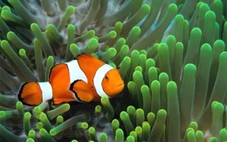 PADI Underwater Naturalist (подводный натуралист)