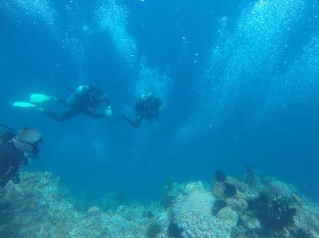 На сайте выложены фото с поездки на филиппины, декабрь 2015г.